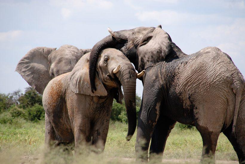 14 Days Safari & Culture Tour by Grassroot Tours