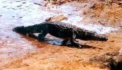 Akatekyi Crocodile Pond