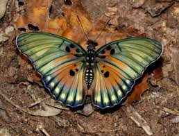 Bobiri Butterflys Kumasi -grassroottours.com